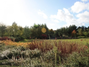 Elvetham Heath Nature Reserve in Sun