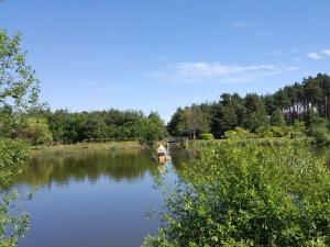 Elvetham Heath Pond