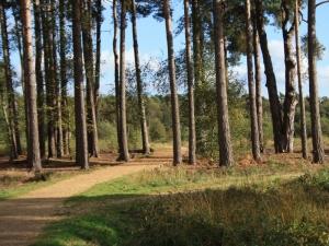 Trees on Elvetham Heath Nature Reserve